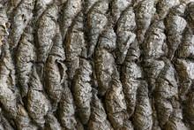 Textured Palm Tree Bark Pattern