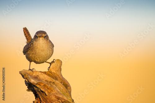 Fotografie, Obraz  Cute little bird