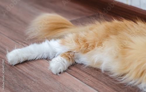 Papel de parede hind legs of a fluffy red cat