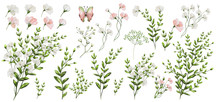 Watercolor Illustration. Botanical Collection. Set Of Wild And Garden Flowers, Leaves, Branches And Other Natural Elements. All Drawings Isolated On White Background. Pink And White Flowers.