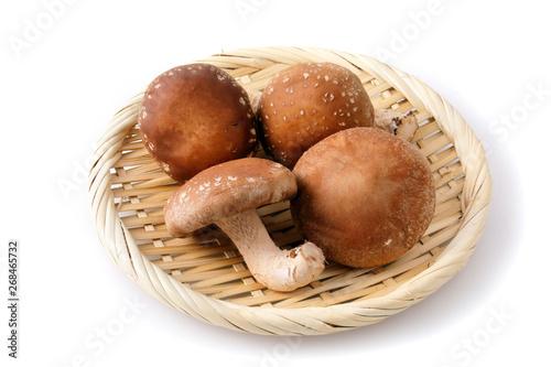 椎茸 Shiitake mushrooms