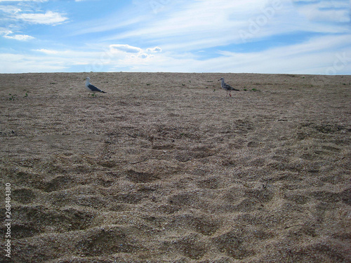 Valokuva albatrosses on a sandy beach in search of food against a blue sky