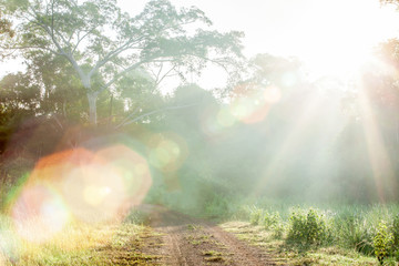 Mystic forest road in foggy morning, fantastic sunrise shining on a pathway into the world heritage site, Dong Yai, Thailand.