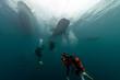 Leinwandbild Motiv Whale Shark underwater approaching a scuba diver in the deep blue sea similar to attack but inoffensive