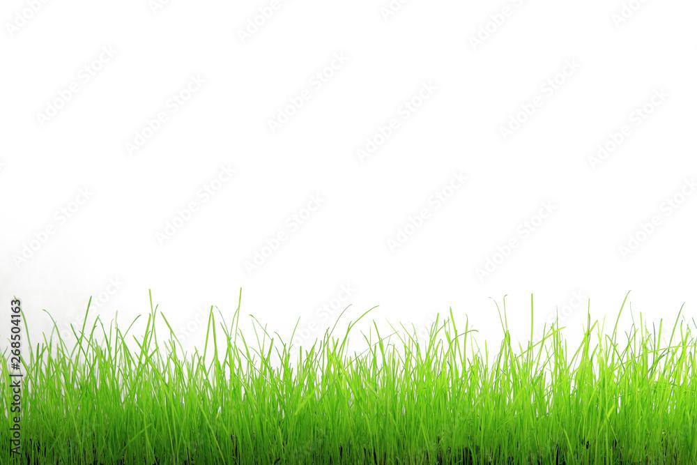 Fototapeta Trawa zielona na białym tle.