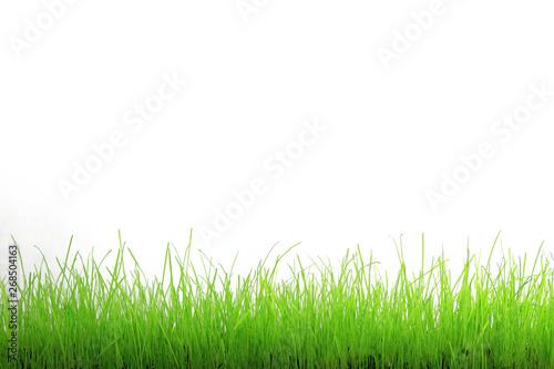 Trawa zielona na białym tle. - fototapety na wymiar