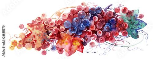 Fototapeta grapevine, grapes painted in watercolor. obraz na płótnie