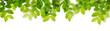 Leinwanddruck Bild - Green leaves isolated on a white background