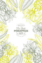 Pineapples And Tropical Leaves Design Template. Hand Drawn Vector Tropical Fruit Illustration. Engraved Style Ananas Fruit Banner. Retro Botanical Frame.