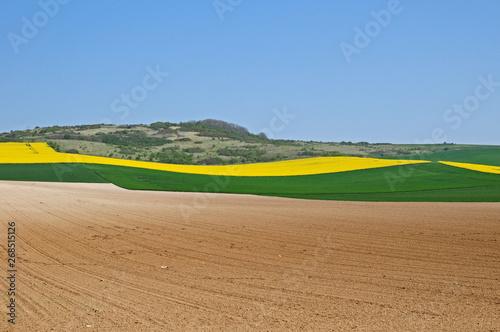 Fototapeta  Campagna e campi di colza a a hervelinghen, Pas-de-Calais, Hauts-de-France