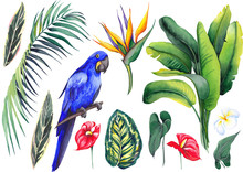 Set With Hyacinth Blue Macaw, Banana Leaves, Calathea, Palm Branch, Strelitzia, Plumeria And Red Flamingo Flowers. Watercolor On White Background. Isolated Elements For Design.