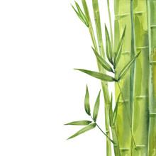 Watercolor Bamboo Stalks