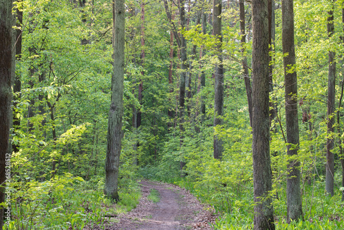 Canvas Prints Road in forest footpath in spring forest