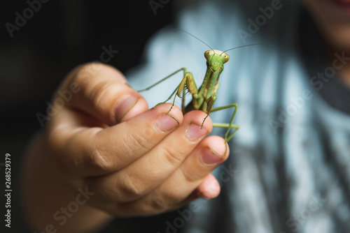 Fotografie, Obraz  Mantis on the fingers