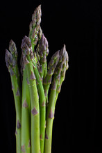 Vertical Photo Of Fresh And Green Asparagus With Water Drops On Them. The Background Is Totally Black. With A Lot Of Space For Text. Asparagus Officinalis, Garden Asparagus Or Sparrow Grass.