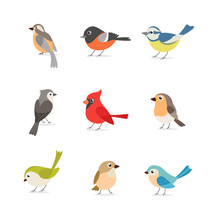Set Of Colorful Birds Isolated On White Background