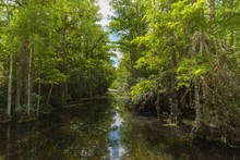 River And Forest Landscape At ...