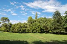 Green Field Landscape, Trees A...