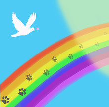 The Rainbow Bridge With Paws Print Going In To The Light