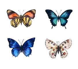 Watercolor colorful butterflies, isolated on white background. blue, yellow, pink and red butterfly spring illustration
