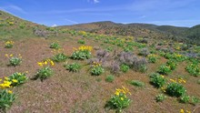Aerial View Of Wildflowers Blooming In The Foothills Above Boise Idaho In The Spring
