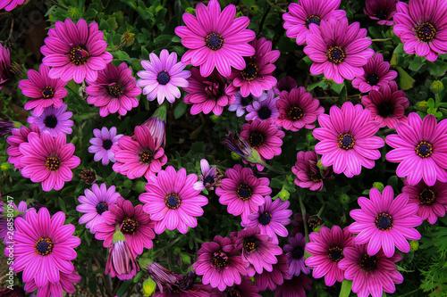 映える紫色 - 268580947