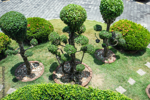 Printed kitchen splashbacks Garden A decorative garden of Tako tree in various shapes and lawn, Backgrounds