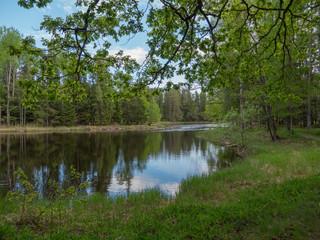 Fototapeta na wymiar Swedish river and salmon area in spring