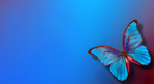 Shades Of Blue. Blue Abstract Blurred Background. Blue Butterfly Morpho On A Blurred Blue Background. Copy Spaces