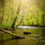 Stunning peaceful Spring landscape image of River Teign flowing through lush green forest in English countryside - 268614132