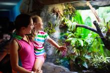 Family Watching Snake In Zoo Terrarium.