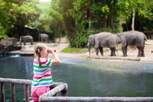 Kids Feed Elephant In Zoo. Fam...