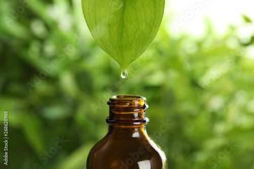 Fototapeta Essential oil dripping from leaf into glass bottle on blurred background obraz na płótnie