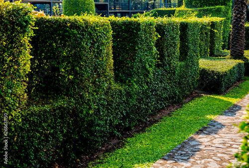 Aluminium Prints Green Luxury landscape design of the tropical garden. Beautiful view of tropical landscape