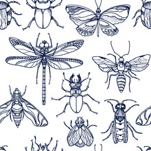 Insect. Bee, Bug, Moth, Dutterfly. Vector Set