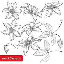 Set With Outline Clematis Or T...