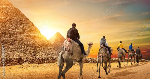 Poster Chameau Camel Caravan and Pyramids