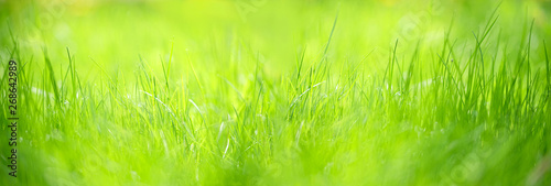 Obraz Green grass abstract blurred background. beautiful juicy young grass  in sunlight rays. green leaf macro. Bright fresh Summer or spring nature background. Panoramic banner. soft selective focus - fototapety do salonu