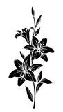 Czarna sylwetka wektor kwiatów lilii.