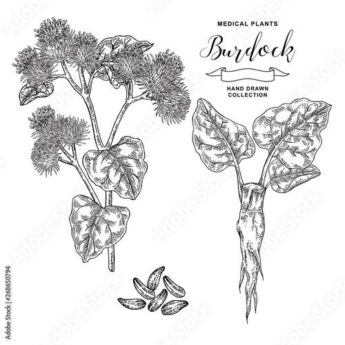 Fotografija Burdock branch hand drawn