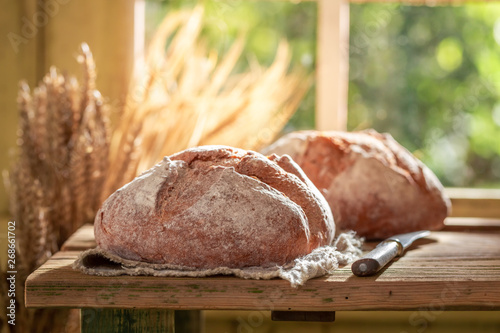Fotografia Healthy loaf of bread with grain and ears in summer
