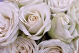 Strauß aus Rosen als Hintergrund