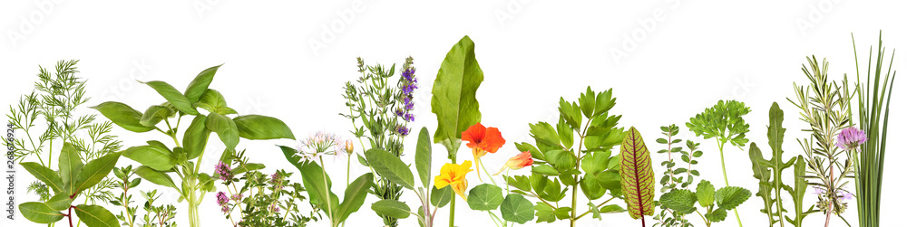 Fototapety, obrazy: Large selection of fresh herbs