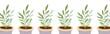 Gardening home plants in ceramic pots