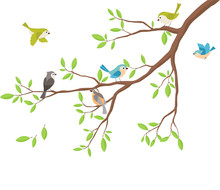 Cute Birds With Tree Branch