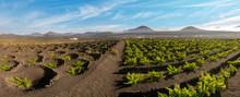 Vineyards Of La Geria, Lanzaro...