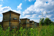 Apiary. Hives In An Apiary Wit...