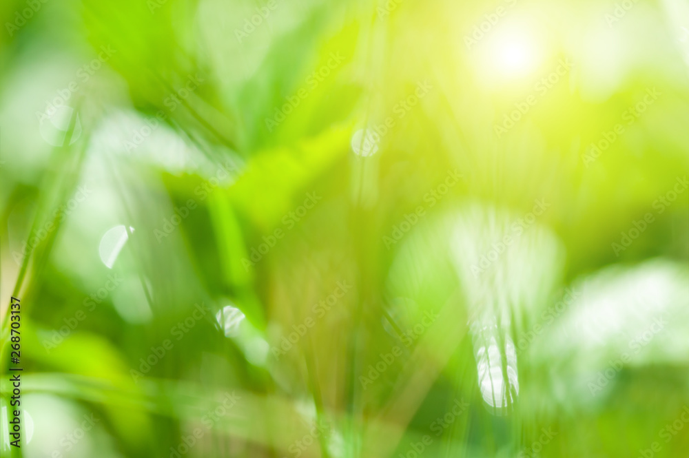 Fototapety, obrazy: Blurred green nature background. Green grass in the summer forest in the sunlight.