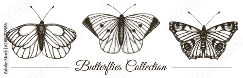 Garden Poster Butterflies in Grunge Vector set of hand drawn black and white butterflies. Engraving retro illustration. Realistic insects isolated on white background. Detailed graphic drawing in vintage style