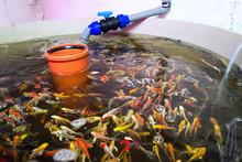 Various Fish Species In Aquapo...